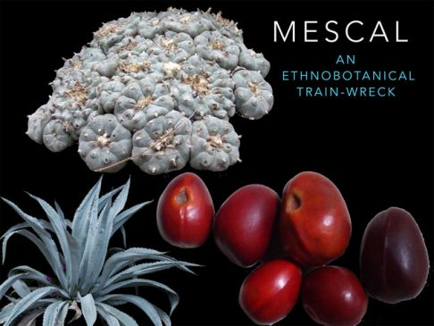 Mescal; an ethnobotanical train-wreck
