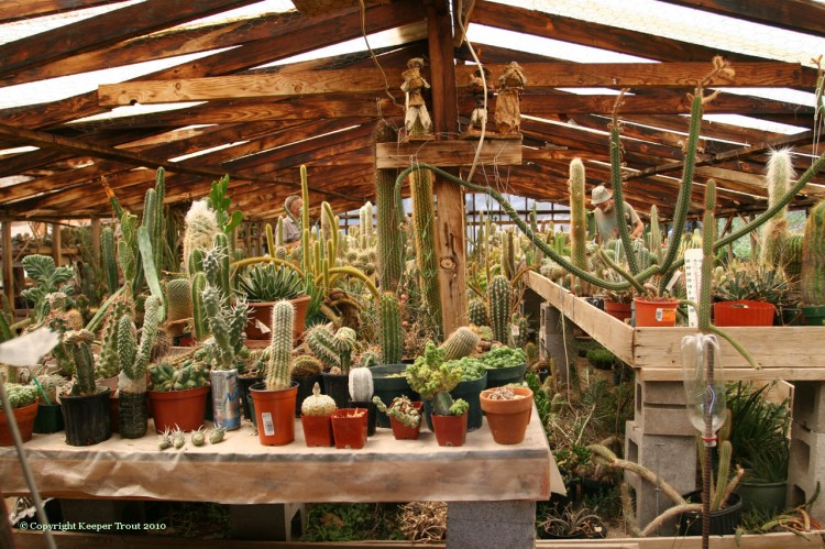 NMCR -- inside view of greenhouse