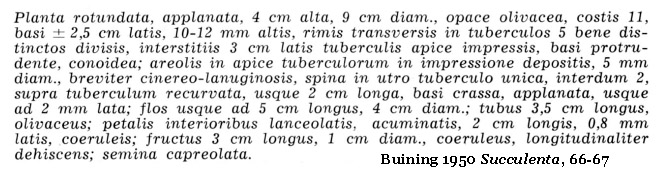 Buining 1950 Succulenta, 66, Latin diagnosis of G. vatteri
