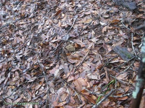 forest life; matsutake-2014nov29-1