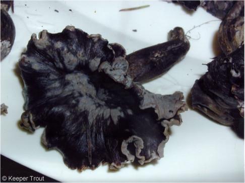 black chanterelle