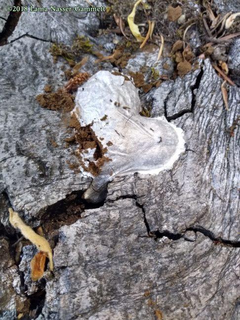 A slime mold