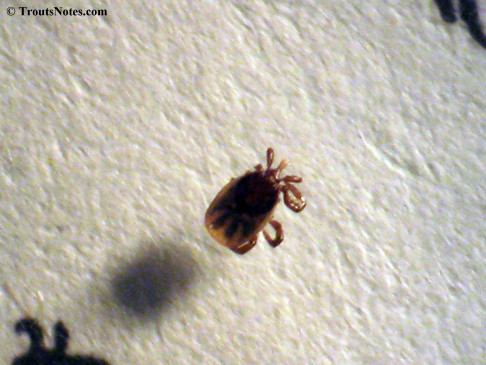 tick-scale_IMG_4685